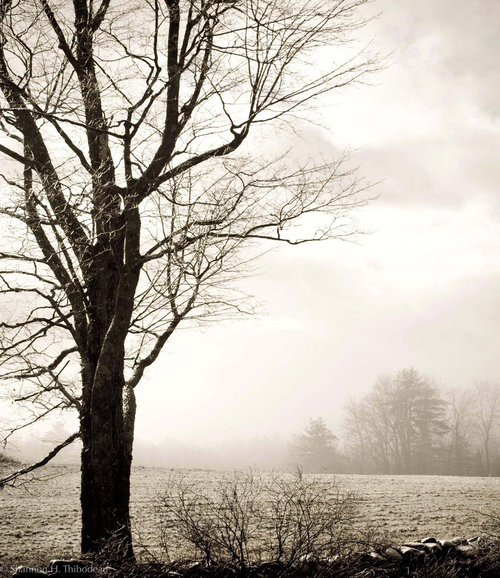 Fine Art and Landscape Photography